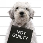 not guilty Dr. Gordon C. Honig, DMD Newark Middletown DE
